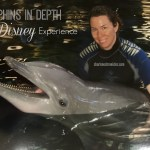 My Disney Dolphins in Depth Experience