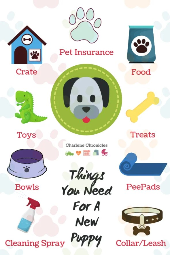 must haves for a new puppy