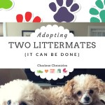 You CAN Adopt Two Littermates from the Same Litter!