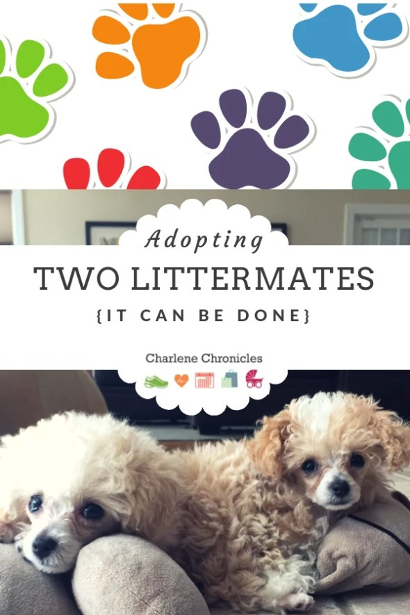 what to consider when adopting two puppies by charlenechronicles.com