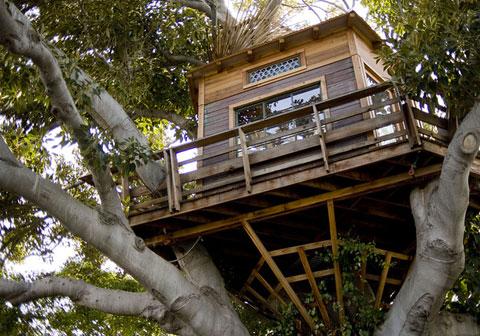tree-house-design.jpg