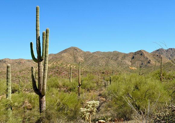 tucson-arizona.jpg
