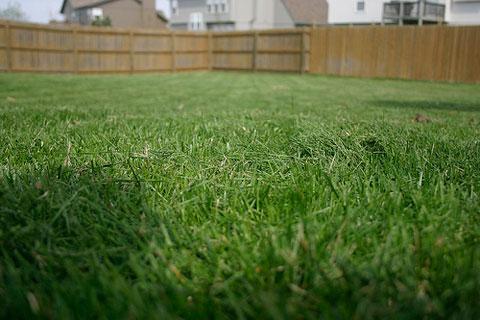 types-lawn-grass.jpg