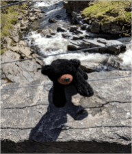 Bear at Feshie Bridge