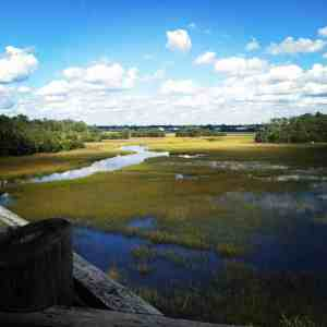 Palmetto Islands County Park - Charleston Crafted
