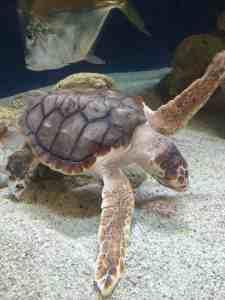 South Carolina Aquarium - Charleston Crafted