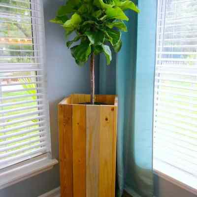DIY Elevated Plant Stand for Fiddle Leaf Figs and Other Indoor Plants