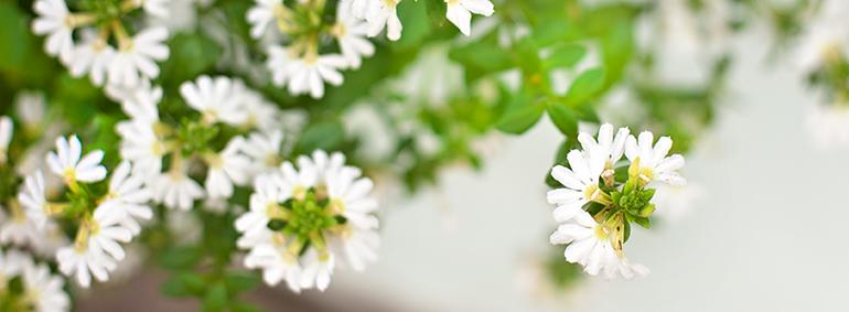 Charlestonly_flowers2