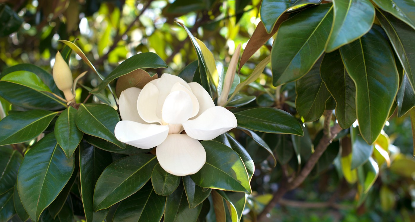 Bloom Perfume: When & Where to Spot Blooms in Charleston