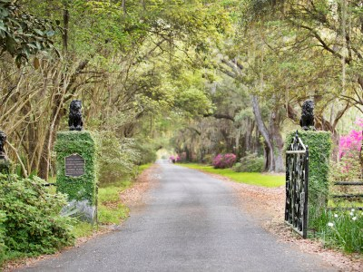8 Spectacular Spots to See Live Oaks in Charleston