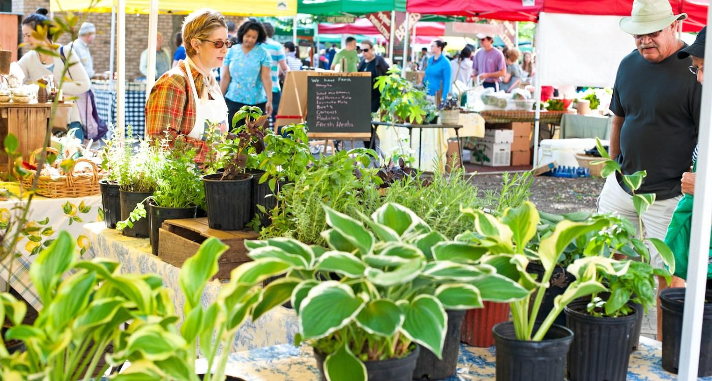 Where + Wear: Charleston Farmers Market