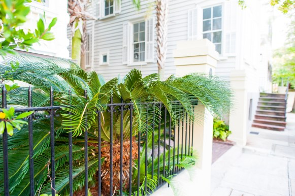 GREEN SCENE: Lulled by perfumed air and a languid pace, Charleston is an unexpectedly seductive place.