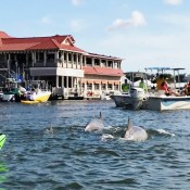 Where to Spot Dolphins in Charleston