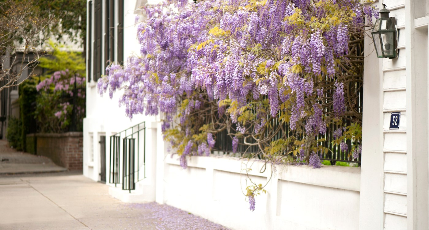 The Sweet Scents of Charleston