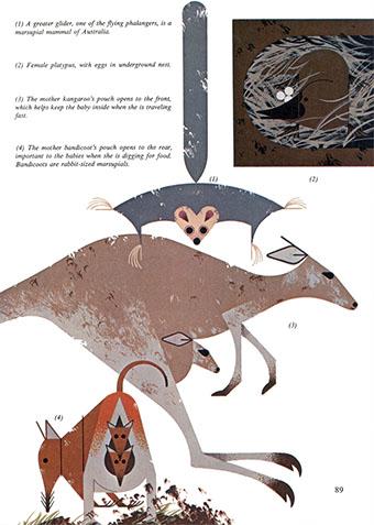 Golden Book of Biology | Marsupials | Charley Harper Prints | For Sale