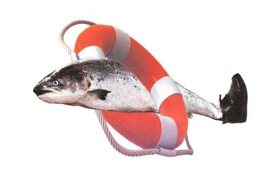 Salmon Fishing_White BKG Charlie Dance.jpg