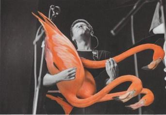 Flamingo Solo copy