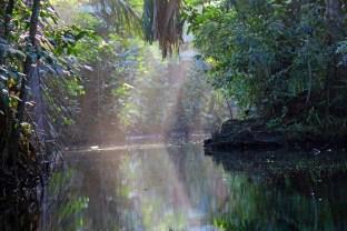 My dusk canoe birding today.