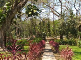 Sidewalk to Butterfly Garden