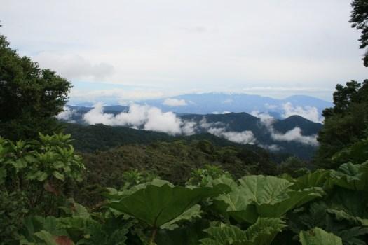 Quetzale National Forest-WEB