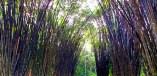 Bamboo Tunnel & 2nd Yoga Platform