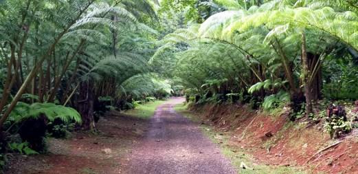 Entrance Road Fern Trees