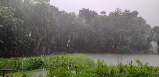 Rain from Dining Room