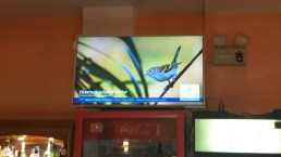 Birds Slide Show in Bar When No Ball Game