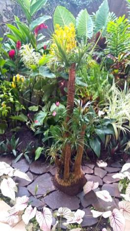 The Elephant Foot plant.