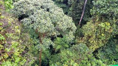Rainforest Canopy Tram