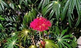 Nearby Flower