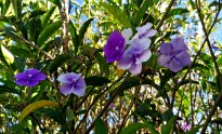 Nearby Flowers