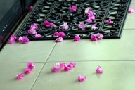 God's Confetti -- Bougainvillea