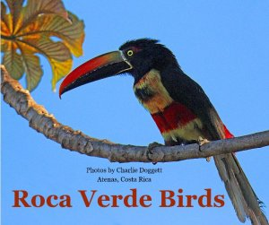 Roca Birds Book