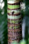 Smaller Decorative Palm