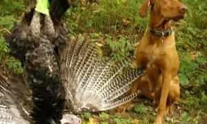 Wisconsin 2016 Fall Turkey Permits are available
