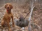 Last of the season turkey