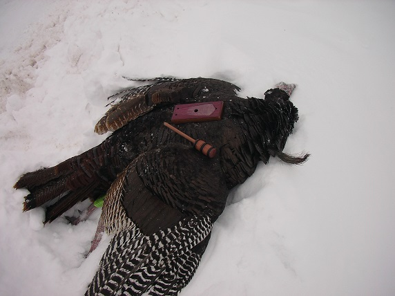 Winter Gobbler taken by charlie elk using Willow Ridge Tongue Teaser call.