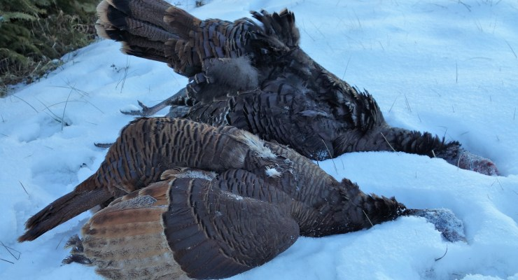 Winter Turkey Hunt; makes for the seasonal slam completion