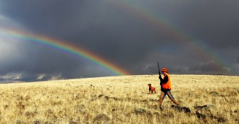 Sage Grouse in Decline?  Hunt them to save them.