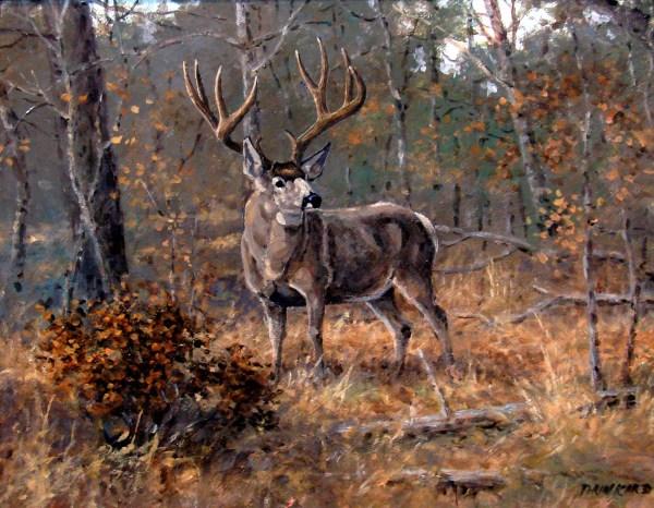 David Drinkard Paintings Deer