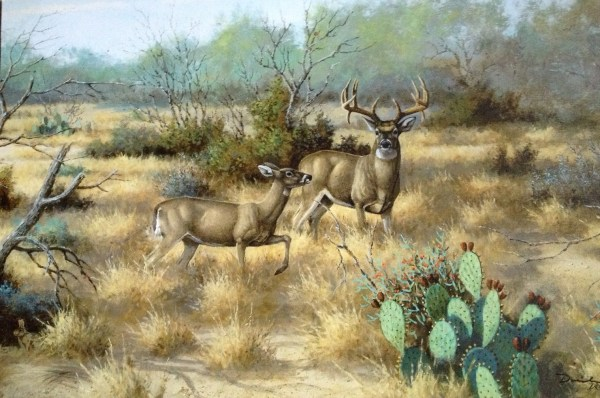 South Texas Rut David Drinkarad Giclee Canvas Whitetail Deer