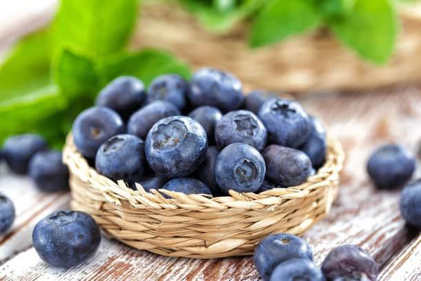 Blueberry u pick season