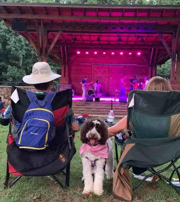 adorable dog at a concert