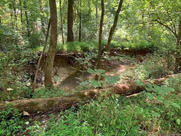 Ribbon Walk Nature Preserve Irwin Creek