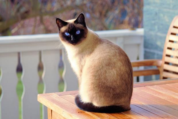 a cat sitting on the table outdoors