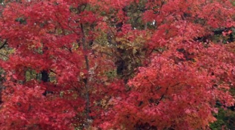 fall foliage in Virginia, Virginia Gardner is a Real Estate agent in Charlottesville