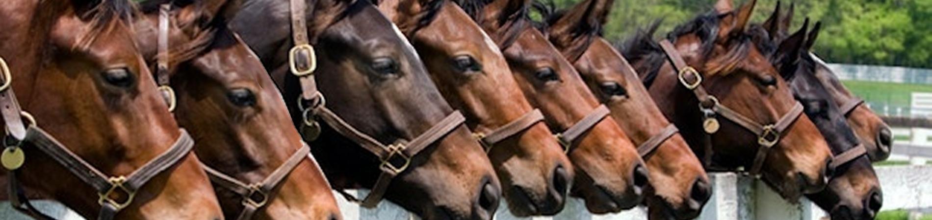 HorseFaces