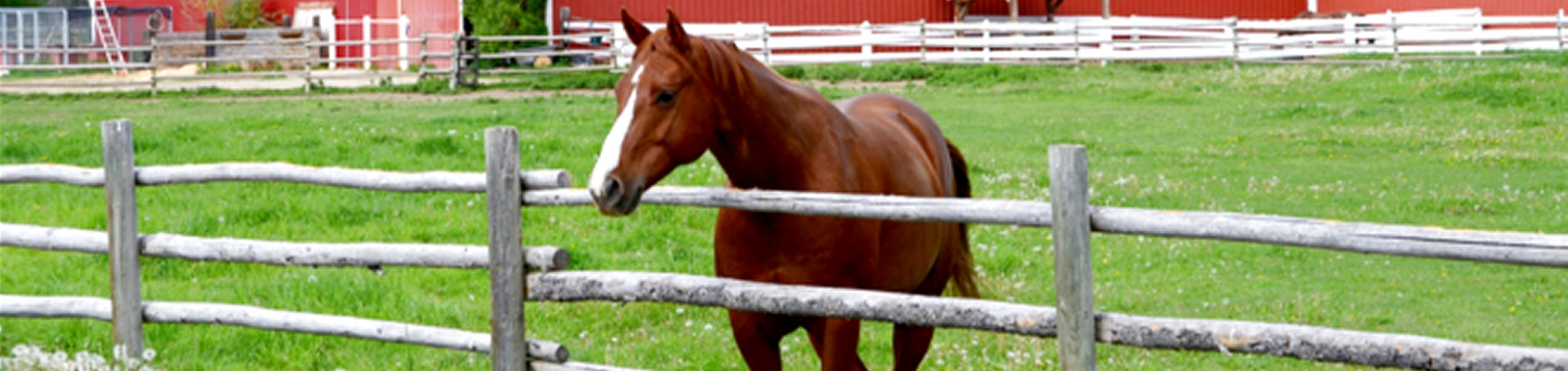 HorseRailFence