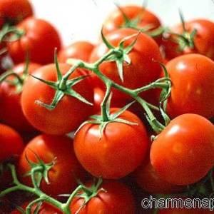 Pomodorini campani